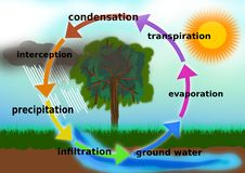Illustrazione di concetto del ciclo dell'acqua royalty illustrazione gratis