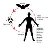 Illustrazione di conoscenza di istruzione del diagramma di basi di ebola Immagine Stock