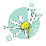 Illustrazione di fioritura del fiore Fotografie Stock Libere da Diritti