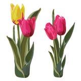 Illustrazione di fioritura gialla dorata di vettore dei tulipani Immagini Stock Libere da Diritti