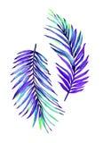 Illustrazione di foglia di palma Fotografia Stock Libera da Diritti