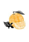 Illustrazione di frutta arancio con il fiore, foglia, fetta isolata su fondo bianco Fotografia Stock Libera da Diritti
