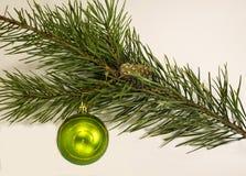 Illustrazione di Natale Branch Immagine Stock
