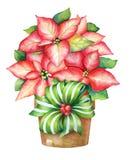 Illustrazione di Natale della pianta di fioritura della stella di Natale in un vaso royalty illustrazione gratis