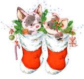 Illustrazione di porcellino del fumetto dell'acquerello Fondo disegnato a mano di vacanza invernale Immagine Stock