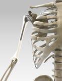 illustrazione di protesi del braccio 3D e della spalla Immagine Stock
