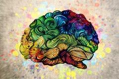 Illustrazione di scarabocchio del cervello con le strutture Fotografia Stock