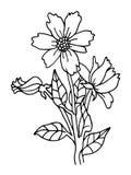 Illustrazione di schizzo dei fiori Fotografia Stock