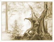 Illustrazione di schizzo della foresta leggiadramente Immagini Stock Libere da Diritti