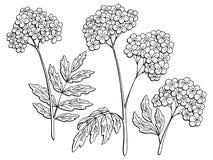 Illustrazione di schizzo isolata bianco nero grafico di Valeriano Immagini Stock