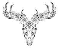 Illustrazione di un cranio dei cervi con le rose ed il modello di boho Fotografie Stock