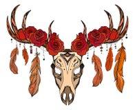 Illustrazione di un cranio dei cervi con le rose, piume Immagine Stock Libera da Diritti