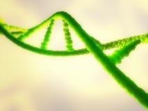 Illustrazione di un filo verde del DNA o dell'acido ribonucleico Immagine Stock