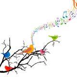 Uccelli di canto Fotografia Stock