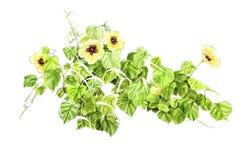 Illustrazione di un wildflower immagini stock libere da diritti