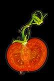 Illustrazione di una fetta del pomodoro Fotografia Stock