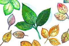 Illustrazione di varie foglie Fotografia Stock Libera da Diritti