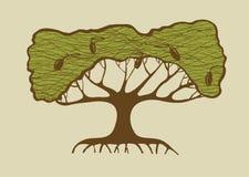 Illustrazione di vecchio di olivo Fotografia Stock Libera da Diritti