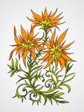 Illustrazione di vettore con i fiori Immagine Stock