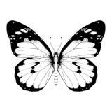 Illustrazione di vettore con la farfalla in bianco e nero illustrazione di stock
