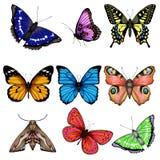 Illustrazione di vettore con la grande raccolta delle farfalle illustrazione di stock