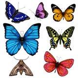 Illustrazione di vettore con la grande raccolta delle farfalle royalty illustrazione gratis