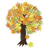 Illustrazione di vettore con un albero di acero Fotografie Stock Libere da Diritti