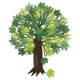 Illustrazione di vettore con un albero di acero Fotografia Stock Libera da Diritti
