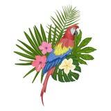 Illustrazione di vettore con un pappagallo dell'ara illustrazione vettoriale