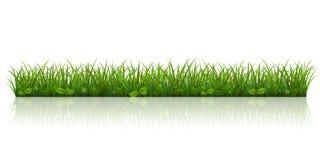 Bella erba verde Immagini Stock