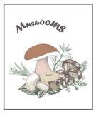 Illustrazione di vettore dei funghi Immagine Stock Libera da Diritti
