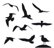 Illustrazione di vettore dei gabbiani di volo di varietà Fotografia Stock Libera da Diritti