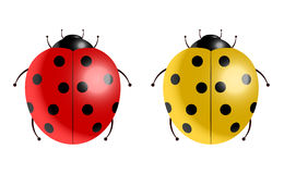 Illustrazione di vettore dei ladybugs Immagine Stock Libera da Diritti