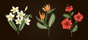 Illustrazione di vettore dei mazzi tropicali del fiore isolati su fondo bianco illustrazione di stock