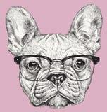 Illustrazione di vettore del bulldog francese del geek dei pantaloni a vita bassa Fotografia Stock Libera da Diritti