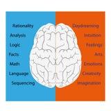 Illustrazione di vettore del cervello Fotografia Stock