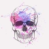 Illustrazione di vettore del cranio umano con la spruzzata dell'acquerello Illustrazione Vettoriale