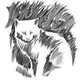 Illustrazione di vettore del gatto. Fotografia Stock
