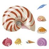 Illustrazione di vettore del logo del mollusco e della conchiglia Metta del simbolo di riserva dei frutti di mare e della conchig illustrazione vettoriale
