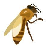 illustrazione di vettore dell'ape marrone Illustrazione di Stock