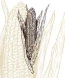 Illustrazione di vettore dell'incisione del cereale Fotografie Stock Libere da Diritti