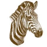 Illustrazione di vettore dell'incisione della testa della zebra Immagine Stock