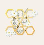 Illustrazione di vettore della camomilla dei favi e delle api Immagine Stock Libera da Diritti
