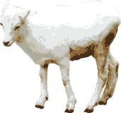 Illustrazione di vettore della capra del bambino Immagini Stock Libere da Diritti