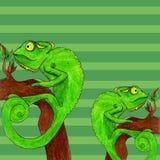 Illustrazione di vettore della carta del camaleonte Immagine Stock