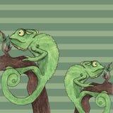 Illustrazione di vettore della carta del camaleonte Fotografia Stock