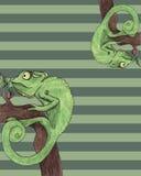 Illustrazione di vettore della carta del camaleonte Fotografia Stock Libera da Diritti