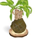Illustrazione di vettore della dracaena fragrante su fondo bianco illustrazione vettoriale