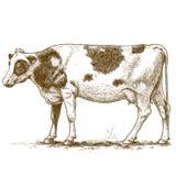 Illustrazione di vettore della mucca dell'incisione Fotografia Stock