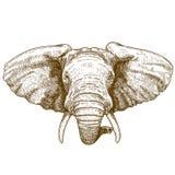 Illustrazione di vettore della testa dell'elefante dell'incisione Immagini Stock